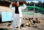 みやざき地頭鶏通販の代表です